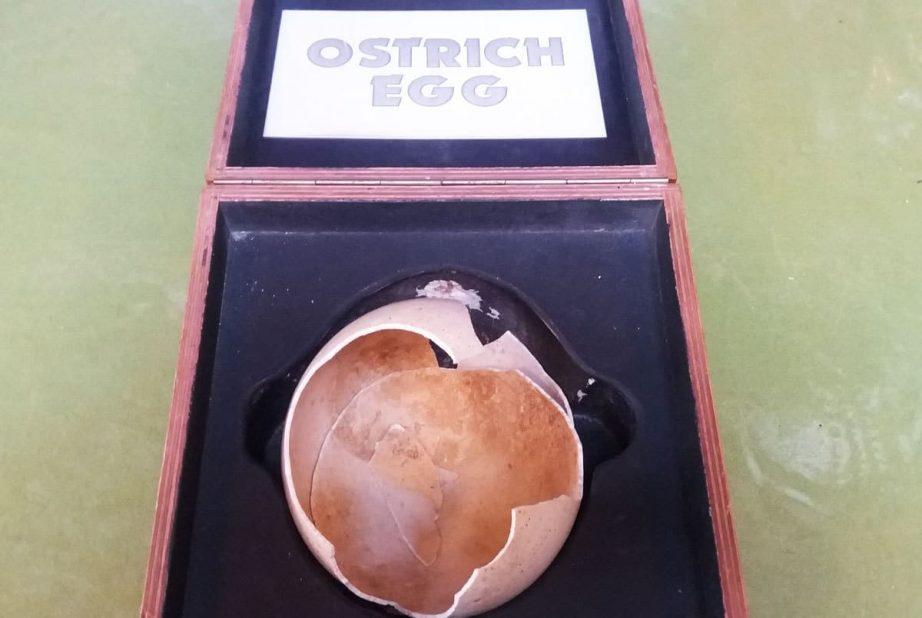 broken ostrich egg